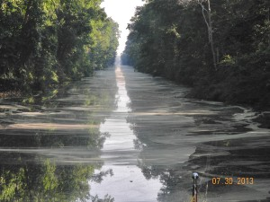 Dismal Swamp in Virginia